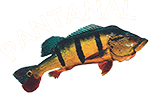 Pantanal Pescaria